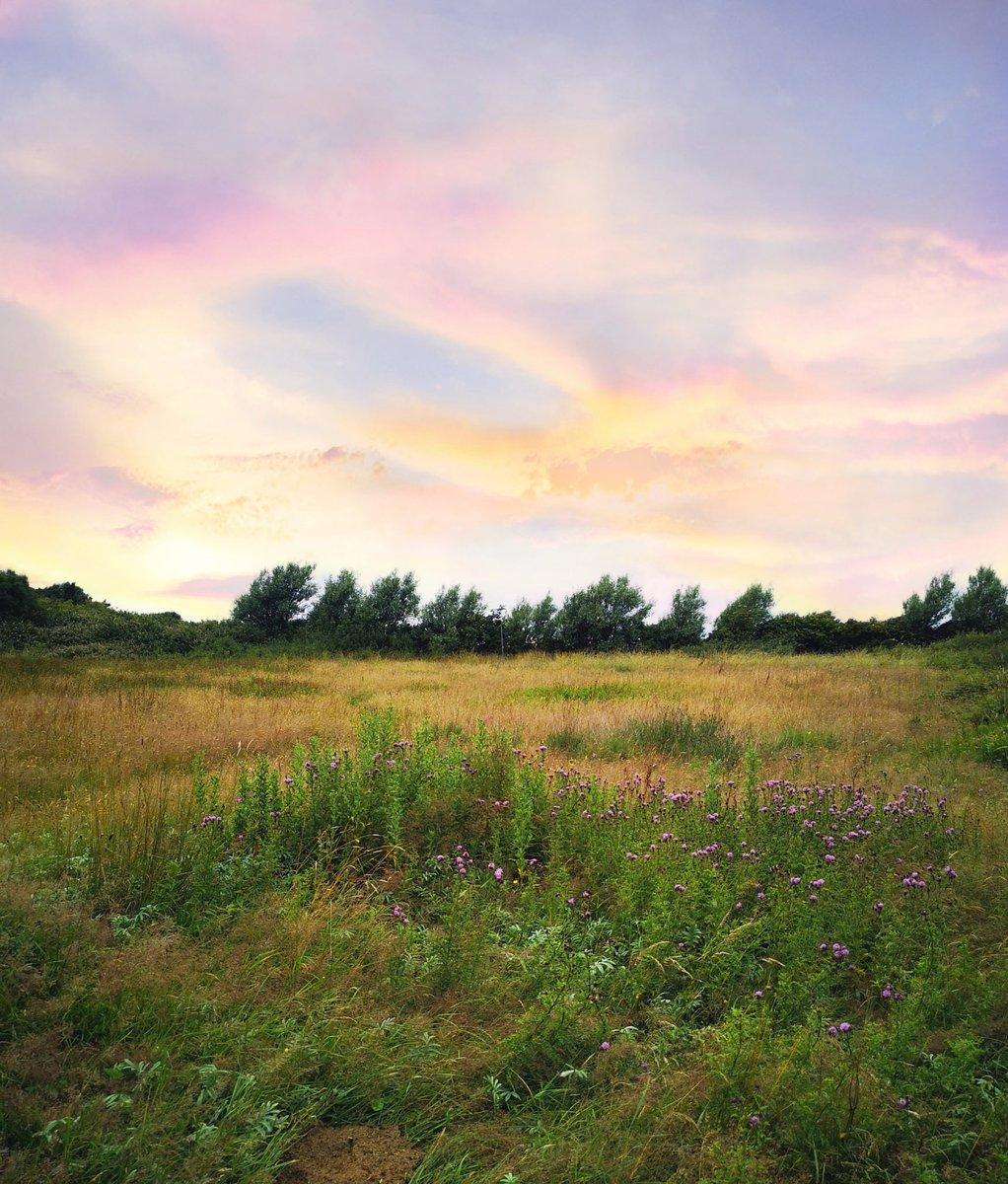 Just a few simple field flowers from North Walney, Cumbria #wildflowerhour <br>http://pic.twitter.com/Uba1TolqTA