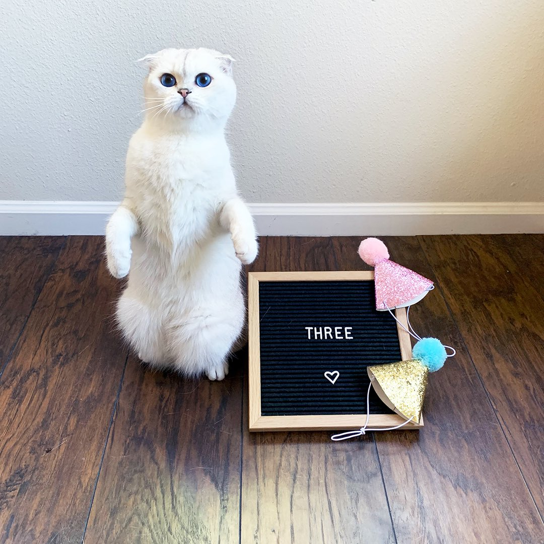 It's Teddy's birthday today! He's three 😊🎉🎉🎉  #CatsOfTwitter #birthdayboy #birthday https://t.co/4ZY4RGLUMD