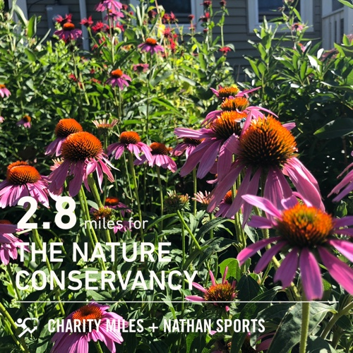 87°   getting my steps in 2.8 @CharityMiles for @nature_org.<br>http://pic.twitter.com/a6oNrr7WuF
