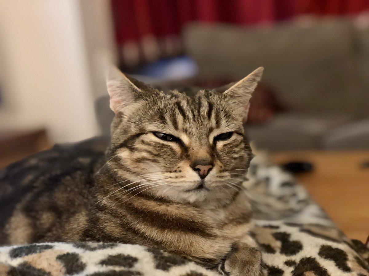 Royalty! #cats #CatsOnTwitter #sundayvibes  #Harrogate #CatsOfTwitter