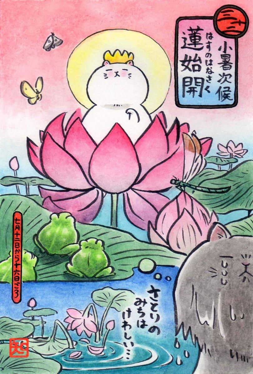 7/12~7/16の七十二候 『蓮始開(はすのはなさく)』 です。 蓮の花が咲き始める季節。 泥の中から花茎を伸ばし、美しい花を咲かす所から、清らかさの象徴とされています。  うちの蓮も今年は咲くといいな… #七十二候 #歳時記 #蓮始開 #蓮 #ねこ #アナログイラスト #アナログ絵描きさんと繋がりたい https://t.co/4iG6OHxfaf
