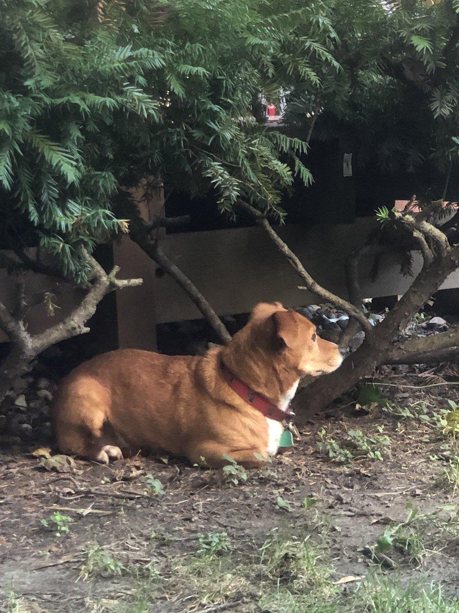 My dog sitting like a cat. Crap. twitter.com/rightmodernist…