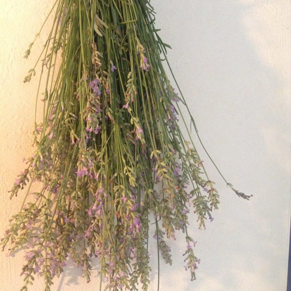 昨日収穫したラベンダーを、ドライハーブにします。