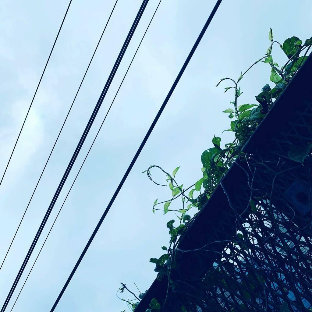結局700本超えのアプリ再インストール&300弱のアプデは朝方までかかってた様子(←さすがに寝てた) アレだな、バックアップはこまめにだな。#sky #イマソラ #cloud #line #sun #green #leaf #fence #asasora https://t.co/PTr0oLKiN7 https://t.co/FGIMtMrCxI
