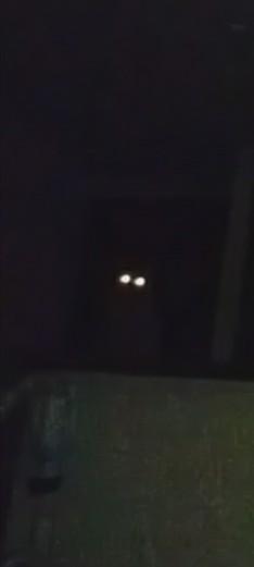 本日はオカルト記念日だそうです。うちで撮れた不思議な光の写真を載せておきますね。このあと、にゃにゃっ!っていう謎の声も聞こえました…。#オカルトの日 #猫