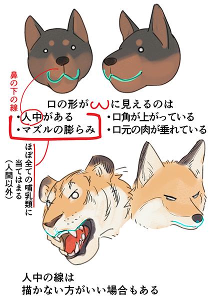 人間と形状が全然違う口🐯構造を知ろう!肉食獣の口の描き方 | いちあっぷ     #絵が上手くなる記事はコレ