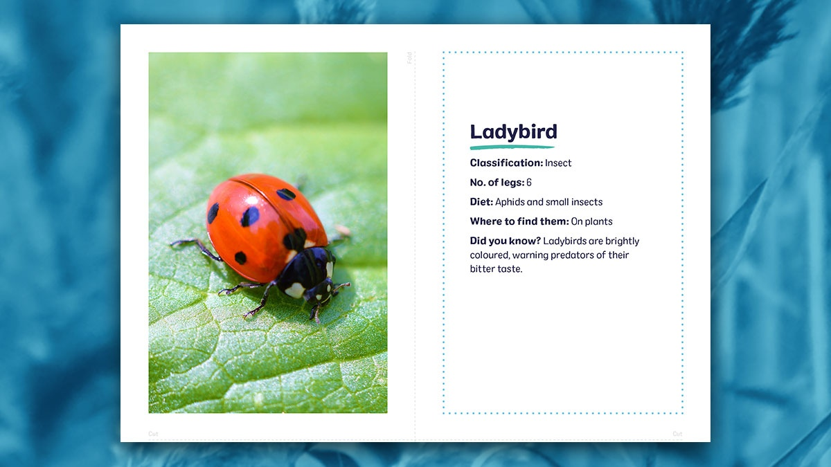 Home schoolers! 🐝 🐞 Discover 'Marvellous Minibeasts' on the #WWTHomeLearning hub socsi.in/o02U0 With the summer holidays in sight, this is our final week of new learning resources. We hope that they have helped to educate and entertain over the last 3 months!