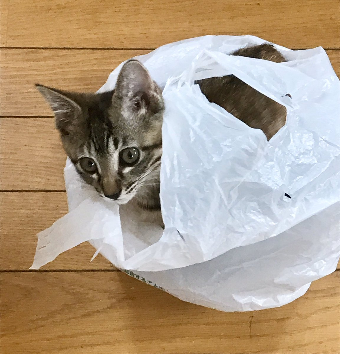 さては袋好きだな、おめー