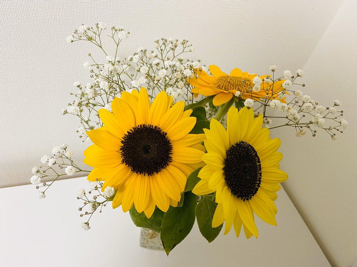 ほっちゃんがお花を買ってきて「ママ、かわいいヒマワリと、かすみお姉ちゃんのかすみ草だよ♪」って。「らんま1/2」を観ていたのはだいぶ幼い頃だったのに、作品やキャラクターはず〜っと心に咲き続けてくれているんだなぁって思って嬉しくなっちゃった😊