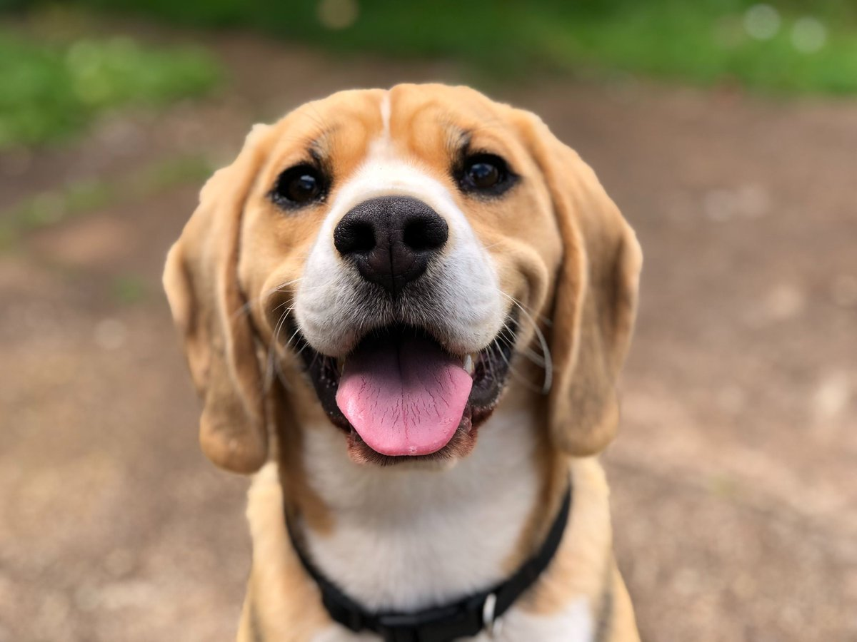 What do you think of this post - How To: A weekly Doggy MOT. Continue reading - https://buff.ly/2LeUzv5  #dogsofsocal #puppiesofinstagram #Doggiespic.twitter.com/HsbScDSKmS