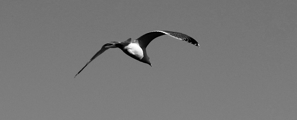 #Bird #blackandwhite #monochrome #photo #photography #picture #image https://t.co/CYeAXWF14V