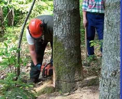 Aumenti di stipendio agli operai forestali illegittimi, ora dovranno restituirli - https://t.co/1cTf8C6ZSZ #blogsicilianotizie