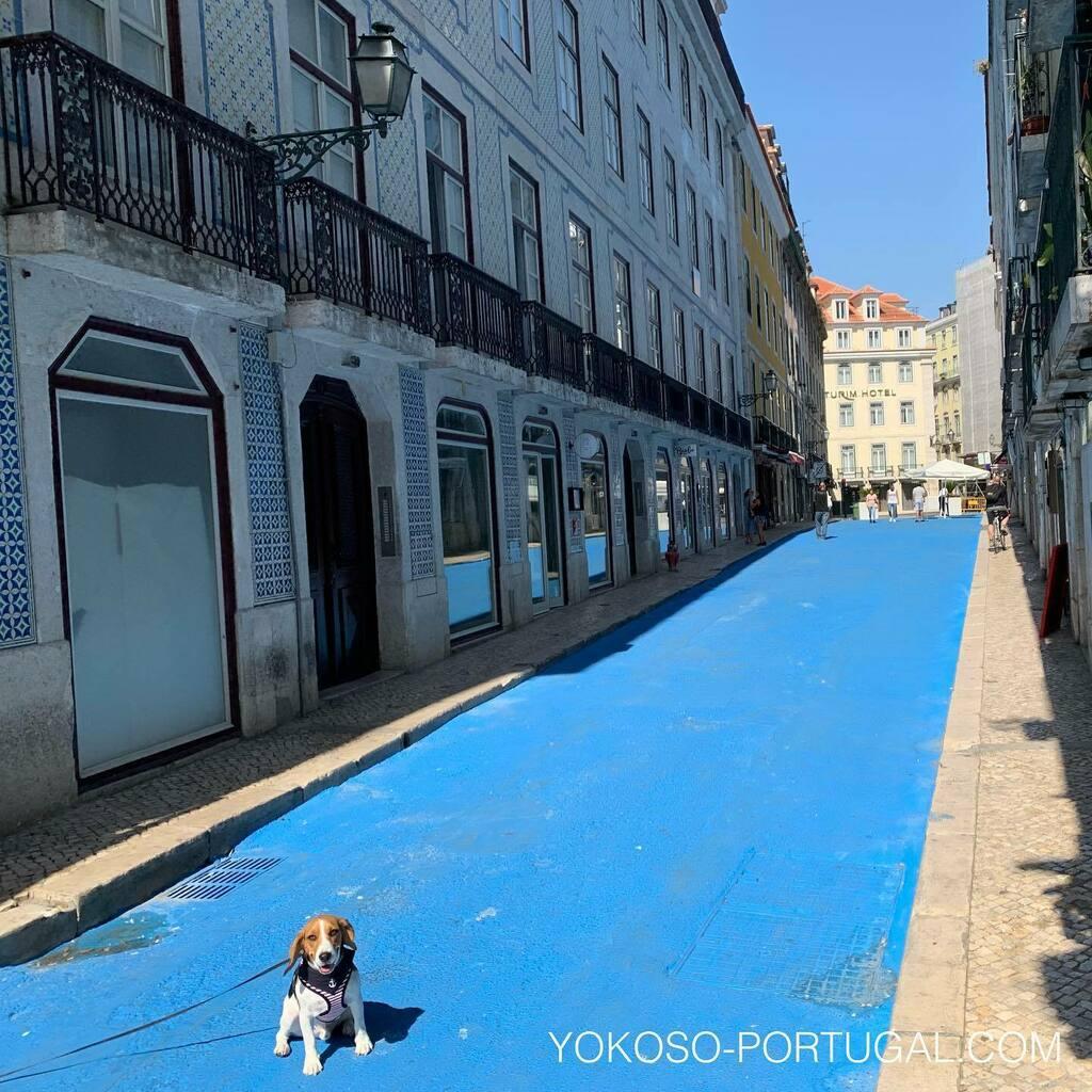test ツイッターメディア - 青く塗られたブルーストリート、Rua dos Bacalhoeiros。リスボンにはピンクストリートもあります。 #リスボン #ポルトガル https://t.co/Xxh38aGUOH