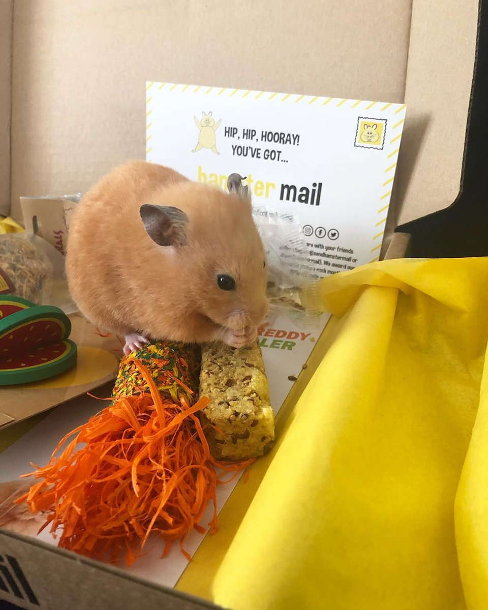 Hamster FunBox Holiday Edition