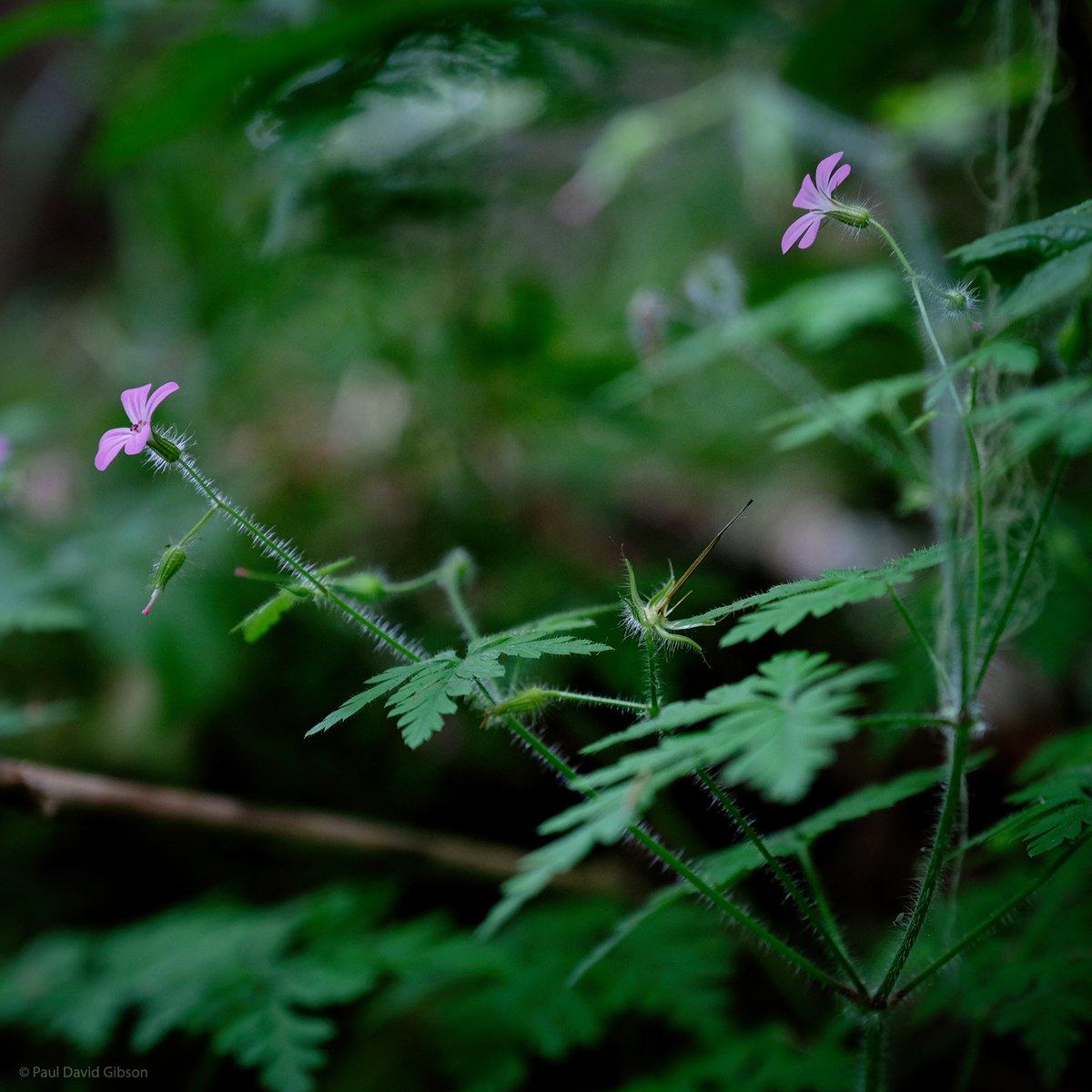 Nature Walk | Federation Forest State Park, WA | July 2020  #nature #coloursofnature #naturelove #natureswonder #washington #pacificnorthwest #pnw #pnwlife #fujifilm #fujixseries #fujixt2 #fuji1655 #fujilove #myfujilovepic.twitter.com/xl4wG698rC