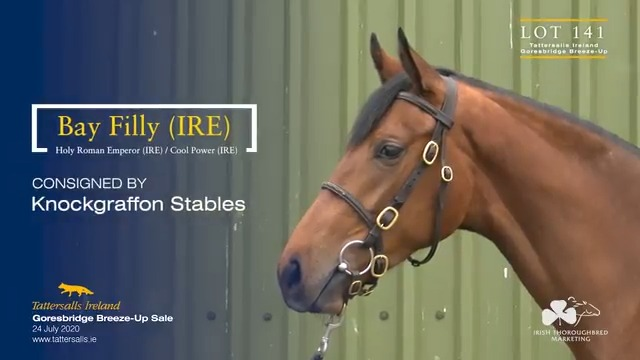 Lot 141 @tatts_ireland @Goresbridge2yos Breeze Up, a racey filly by proven G1 sire Holy Roman Emperor. Out of Cool Power, a winning ½-sister to Champion Sprinter Slade Power and dam of multiple winner Major Power Offered from @speedybyrne #CoolmoreSires