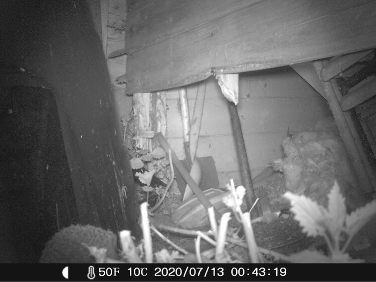 We have hedgehogs loving in our shed #30DaysWild #365DaysWild Sometimes it's worth not fixing things straight away #Permaculture #earthcarepic.twitter.com/dZhfg05jSU