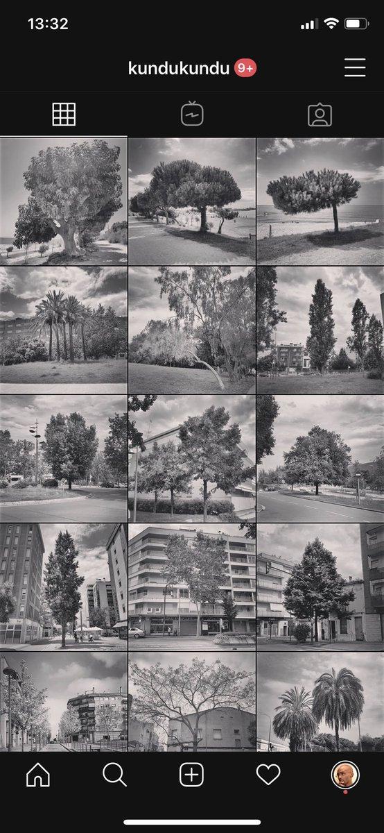 I'm on Instagram as kundukundu. Follow my #blackandwhite #trees photos. ❤️