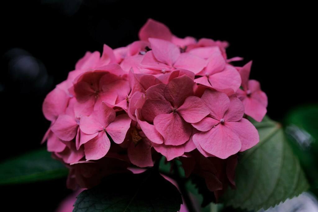 #flowers #nature #富士フイルム #fujifilm #xt3 #fujixseries #xf90mm #instagramjapan #japan https://instagr.am/p/CClK29RJUSw/pic.twitter.com/8mDXCtuJ9S
