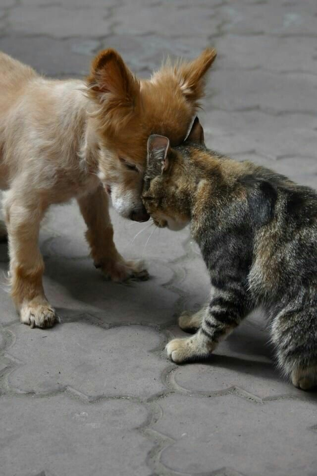 """Buenos Días  Feliz y Bendecido Lunes.  """" Lo que más me gusta de los Animales es que no usan palabras sólo usan Sentimientos """" #13Dejulio #saludoplanetario #AmorSincero #amordefamilia #ayudarnoshacebien #AdoptaNoCompres #AdopcionResponsable #Dog #gatos #SOSVenezuelapic.twitter.com/dA9RcJblUm"""