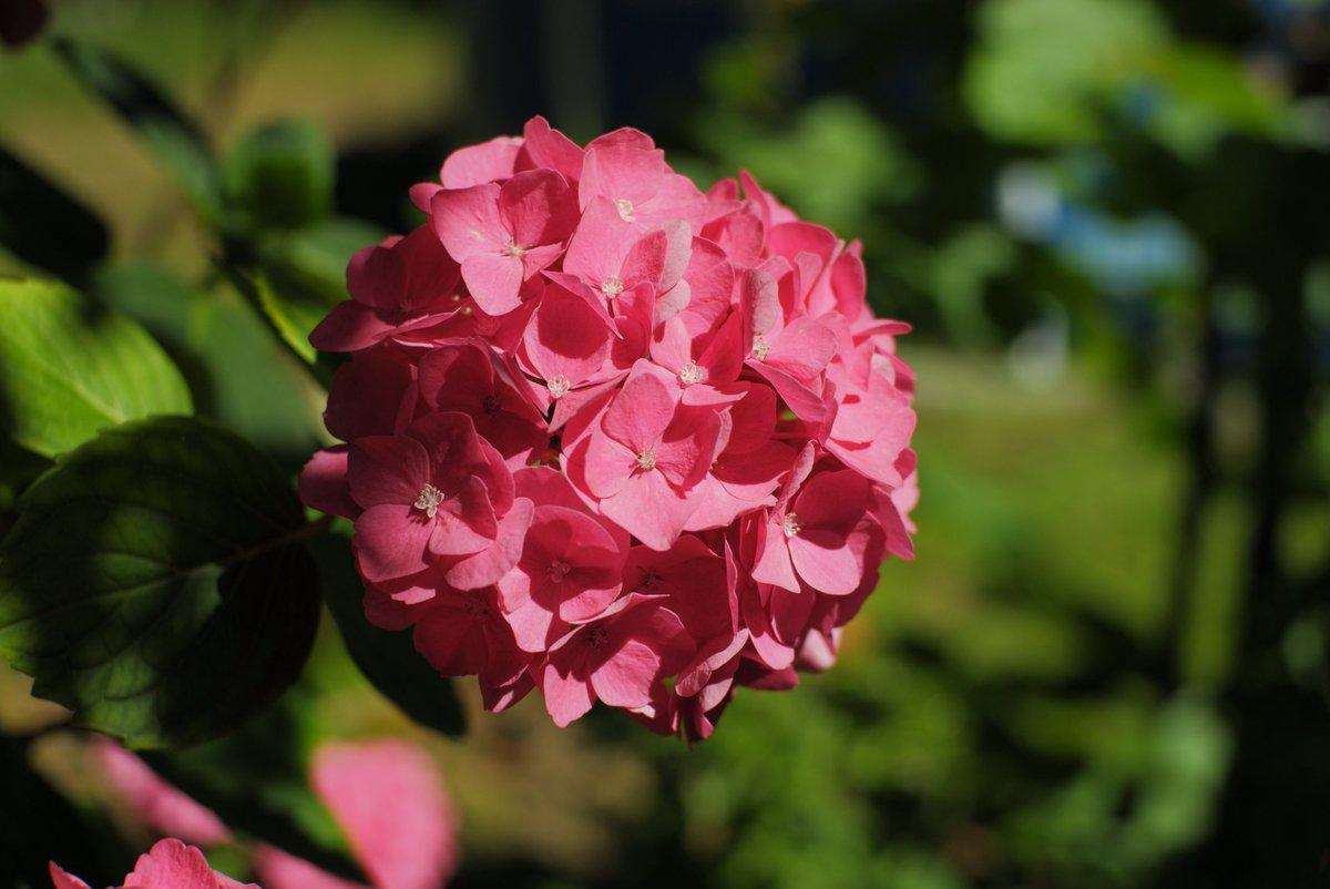 Garden Photography  #superia100 Film Simulation by @photopiotrs  #gardeninspiration #garden #gardenphotography #flowerphotography #flower #plantphotography #naturephotography #naturfotografie #blumenliebe #gartenliebe #xt100 #fujixseries #fujifilmde #fujixweekly #filmsimulationpic.twitter.com/b5kCsXI9fn