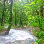 Image for the Tweet beginning: 涼をお届け #上高地 #岳沢 #徳沢ロッヂ #中部山岳国立公園