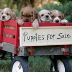 Image for the Tweet beginning: Buyer Beware: Petland is selling