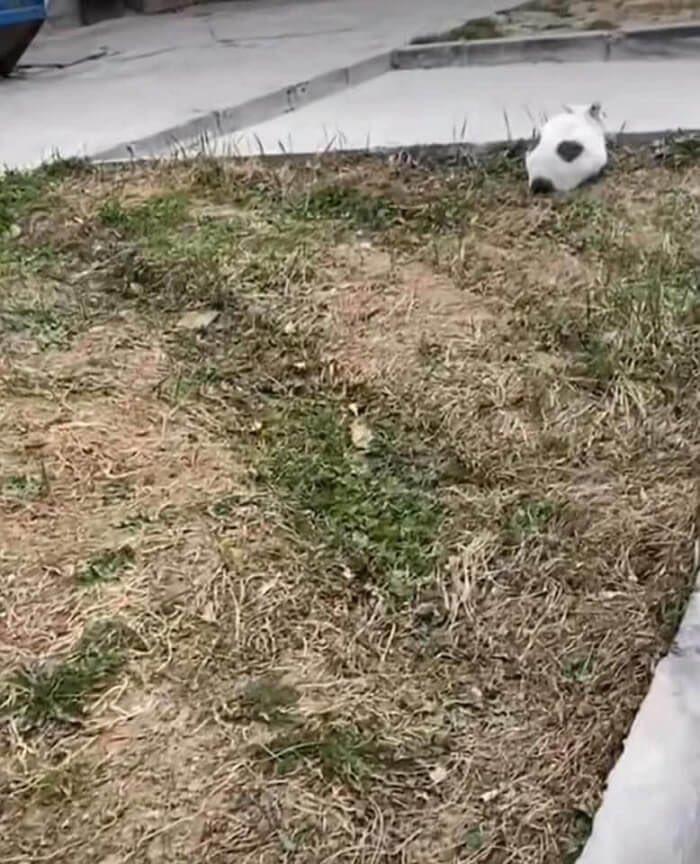 ただのサッカーボールだと思いきや?正体はあの動物だった!