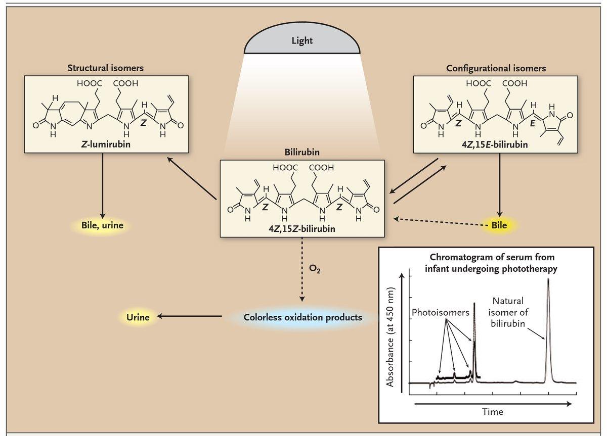 -Isomerización estructural a lumirrubina (excretada en bilis y orina) (irreversible) -Fotooxidación a moléculas incoloras y polares de bajo peso molecular (excretadas en orina) -Configuración estructural al isómero 4Z,15E (excretado en bilis) (reversible) (vía más rápida) https://t.co/cZaNRxNKPS