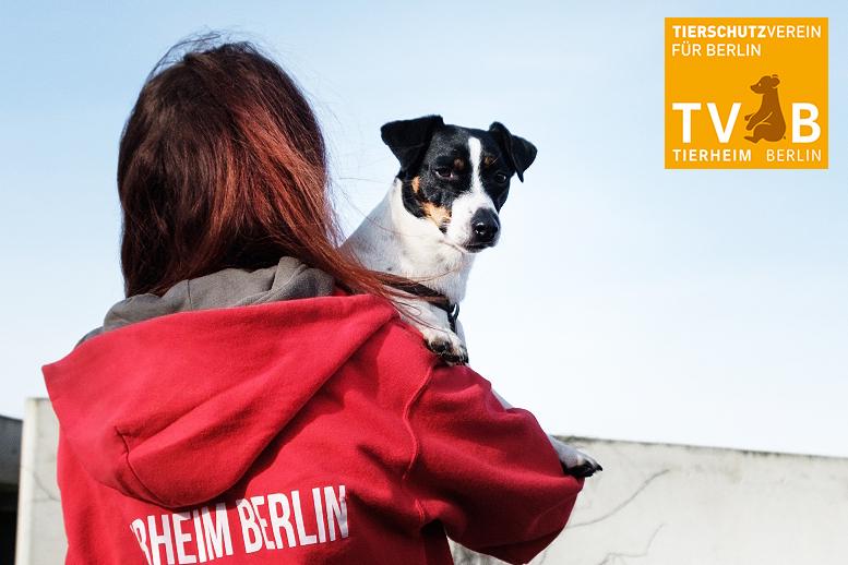 Tierschutz Berlin Tvbberlin Twitter
