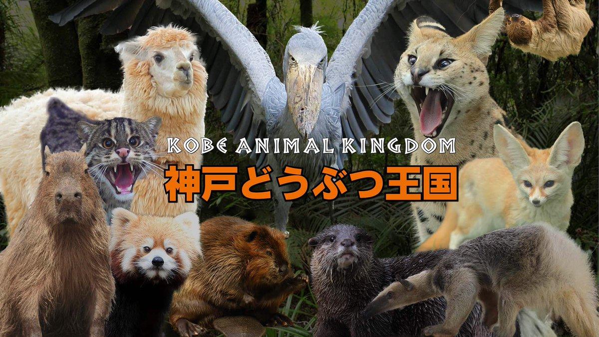 王国 動物