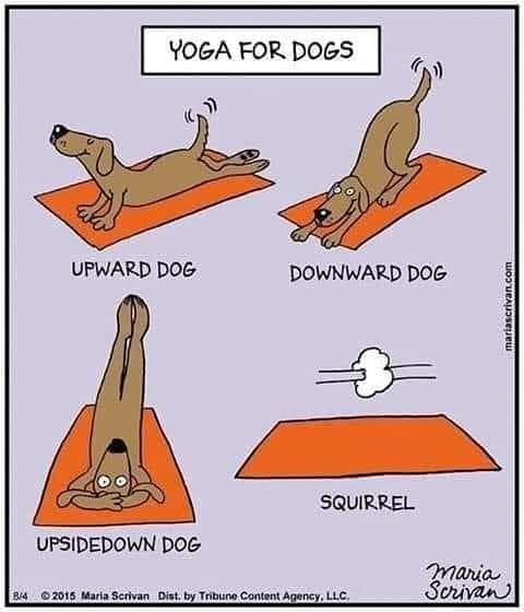 #thinkaboutit #senseofhumor #useyourhead #nerdhumor #justajoke #getoverit #funnycartoons #instatoons #twittertoons #dogs #doghumor #ilovedogs #doglovers #dogslife #yoga #yogalifepic.twitter.com/w4UqpKq9PL