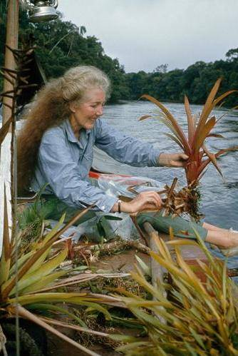 👩🔬Scientist of the week: Margaret Mee👩🔬 ⠀ OK, she's not technically a scientist, but she's one of my heroes.... https://t.co/rg2bXMn5mJ  #ScientistOfTheWeek https://t.co/3e6LDCv2j1