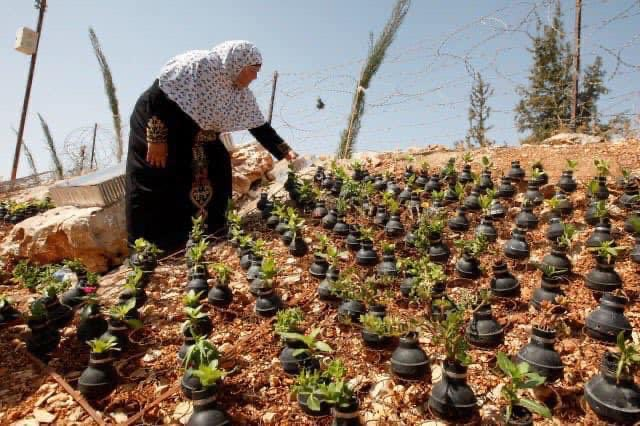 سيّدة فلسطينيّة تجمع قنابل الإحتلال الإسرائيلي وتزرع فيها الورد ..! نحن نزرع الحياة يا سادة https://t.co/IzUoBNsn6Y
