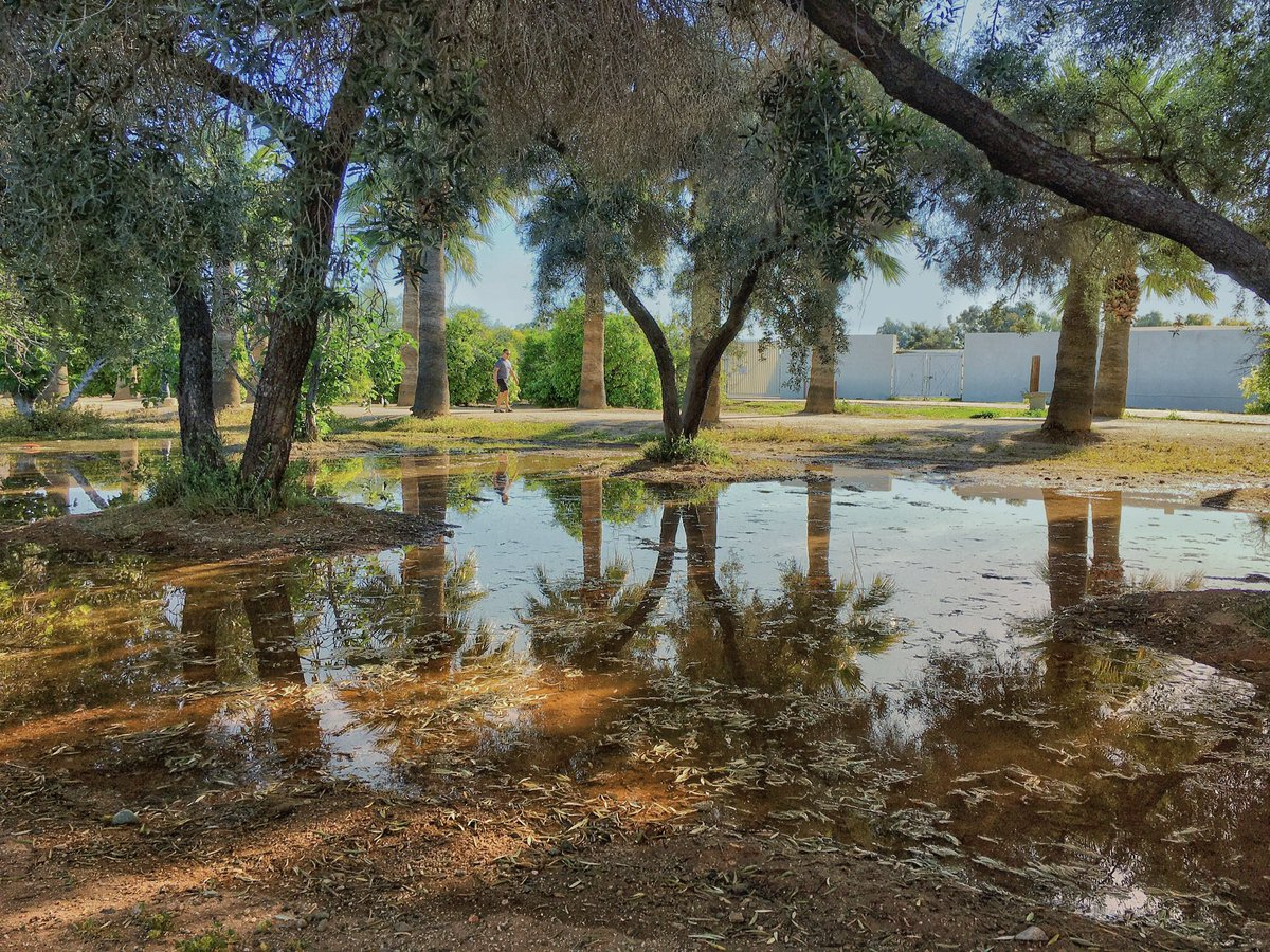 Reflections at a park as I'm taking my dog for a walk. Shot on iPhone 11 using @moment 58mm lens. #shotoniphone #iphonephoto #iphonephotography #arizona #aroundtown #moment #shotonmoment #momenttele #moment58 #moment58mm #lightroomcc #lightroommobile #itsagooddaytohaveagoodday pic.twitter.com/8hpOIYQosF