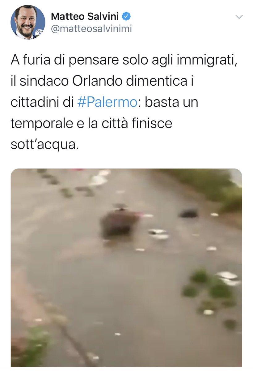 #sciacallo