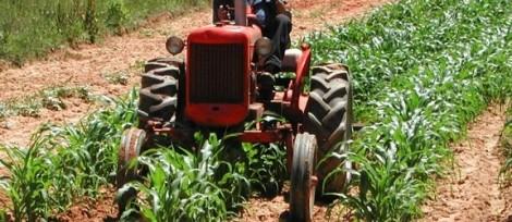 In Sicilia un operaio agricolo su tre lavora in nero, l'allarme dei sindacati - https://t.co/JNRq9WhYND #blogsicilianotizie