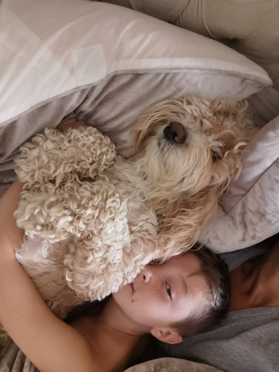 Honestly my #Dog I swear he thinks hes a human #teddy #dogslife #bedselfie pic.twitter.com/5yA1hdS8Pg