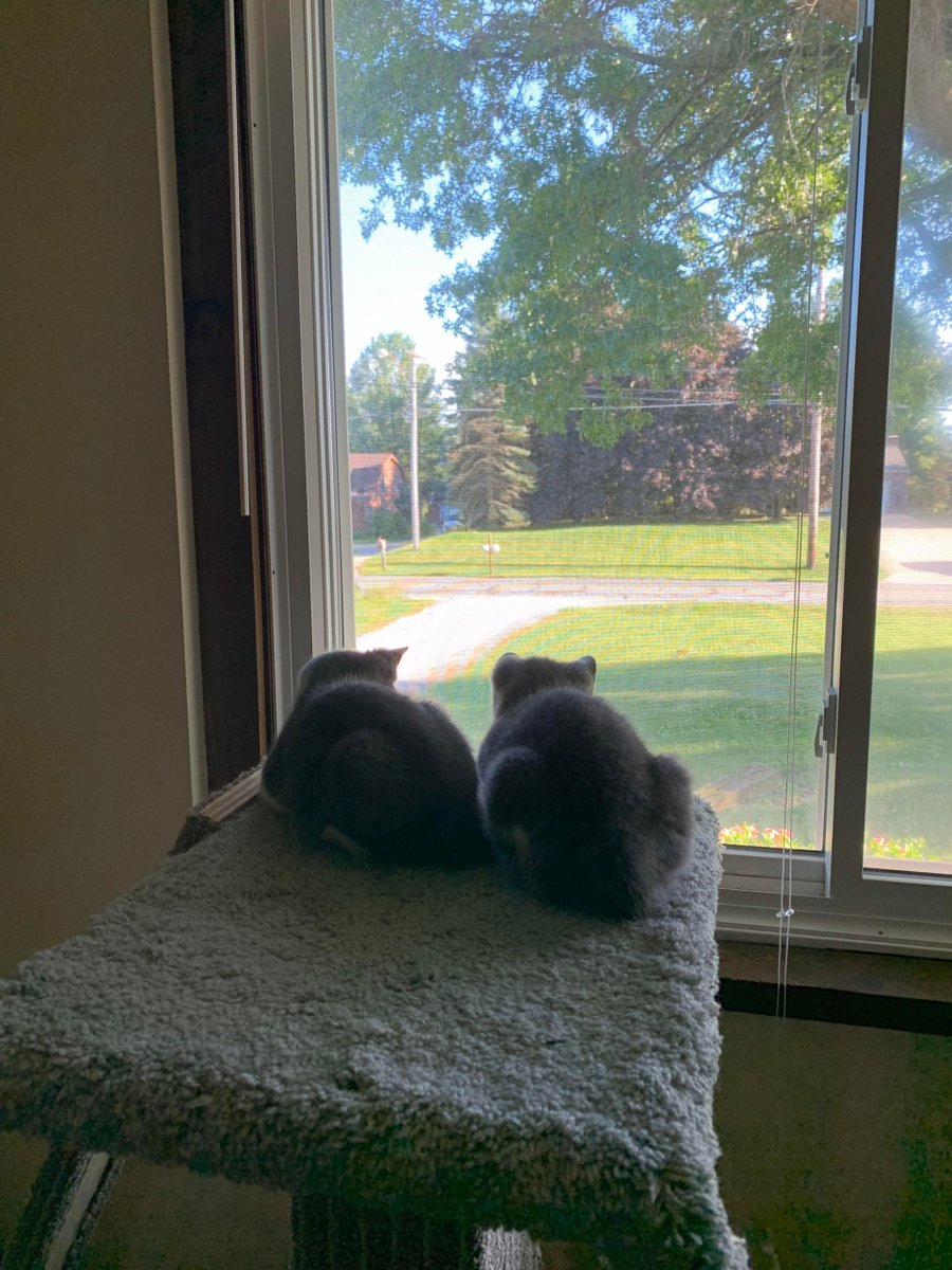 2 smol loafs   #Cats #Cat #Kittens #Kitten #Kitty #Pets #Pet #Meow #Moe #CuteCats #CuteCat #CuteKittens #CuteKitten #MeowMoe