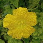 Image for the Tweet beginning: #Floridacoronavirus #FlowWithMe #iPhone #sonyphoto #Flowers