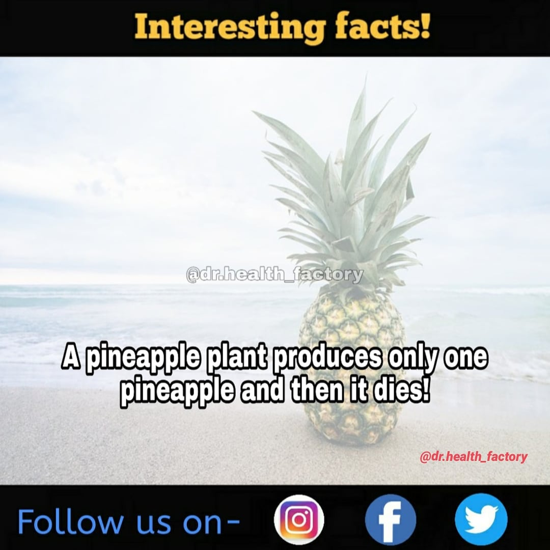 Follow us for more interesting facts!! #fruitsbasket #lifegoals #life #lifeisgood  #healthylifestyle #humanfacts #doctors #healthfacts #healthline #healthylife #fittness #exercise #facts #instagram  #interesting #knowledgeable #educate #drhealthfactory https://t.co/BfWZJyDi0S