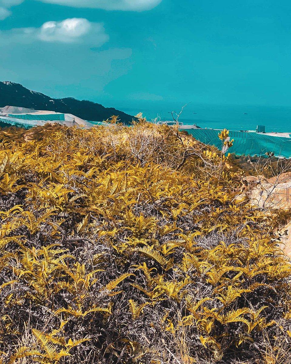 Gold & Blue #iphonephotography #goldandblue #beautifuldestinations #wanderlust #photography #hongkong #hills #photoart #hk #lightroompresets #photogram #shotz_delight #daylightphotography #picoftheday #hk_shooters #visithk https://t.co/bYkVYMssRW