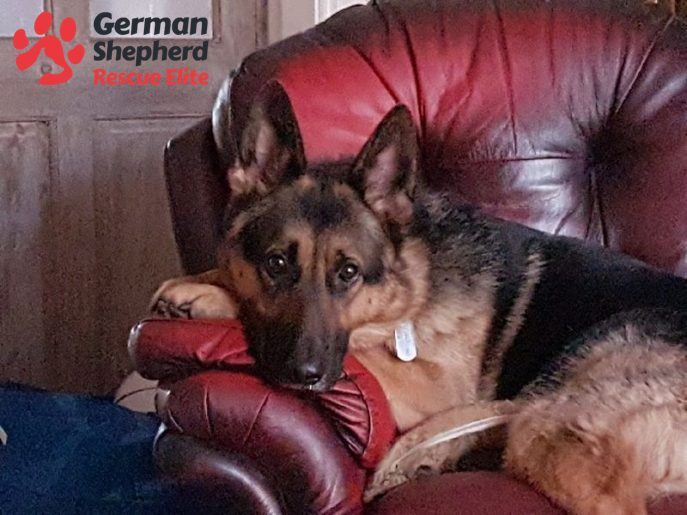 .@gsrescueelite Can't commit to a #dog forever? Why not foster instead? You can make a difference to a #dog in need https://t.co/DAwfLDpYBK https://t.co/zWp0IljY8c