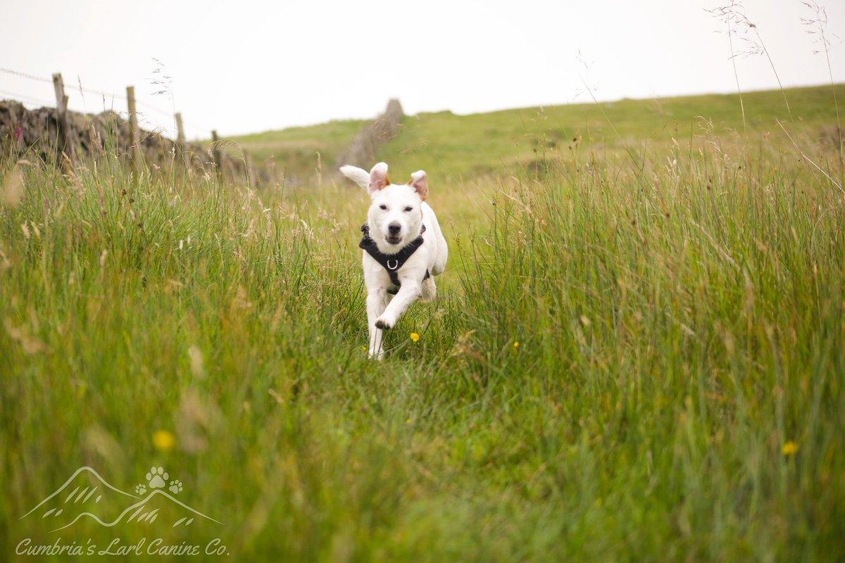 Kiera  #dog #dogs #dogsoftwitter #lakedistrict #cumbria https://t.co/NJxZJfxPWS
