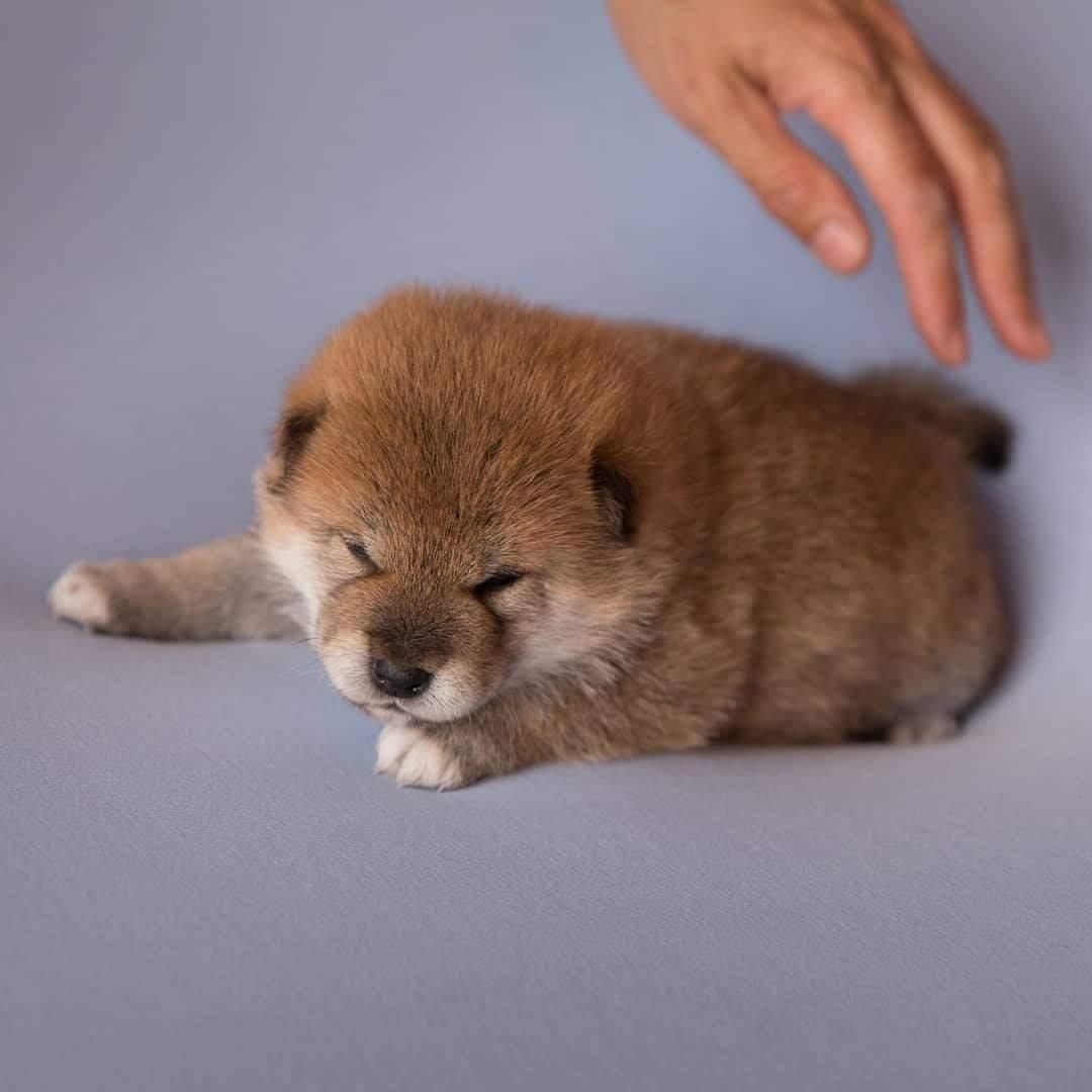 #dog!! (cute) https://t.co/elC6Z77heg