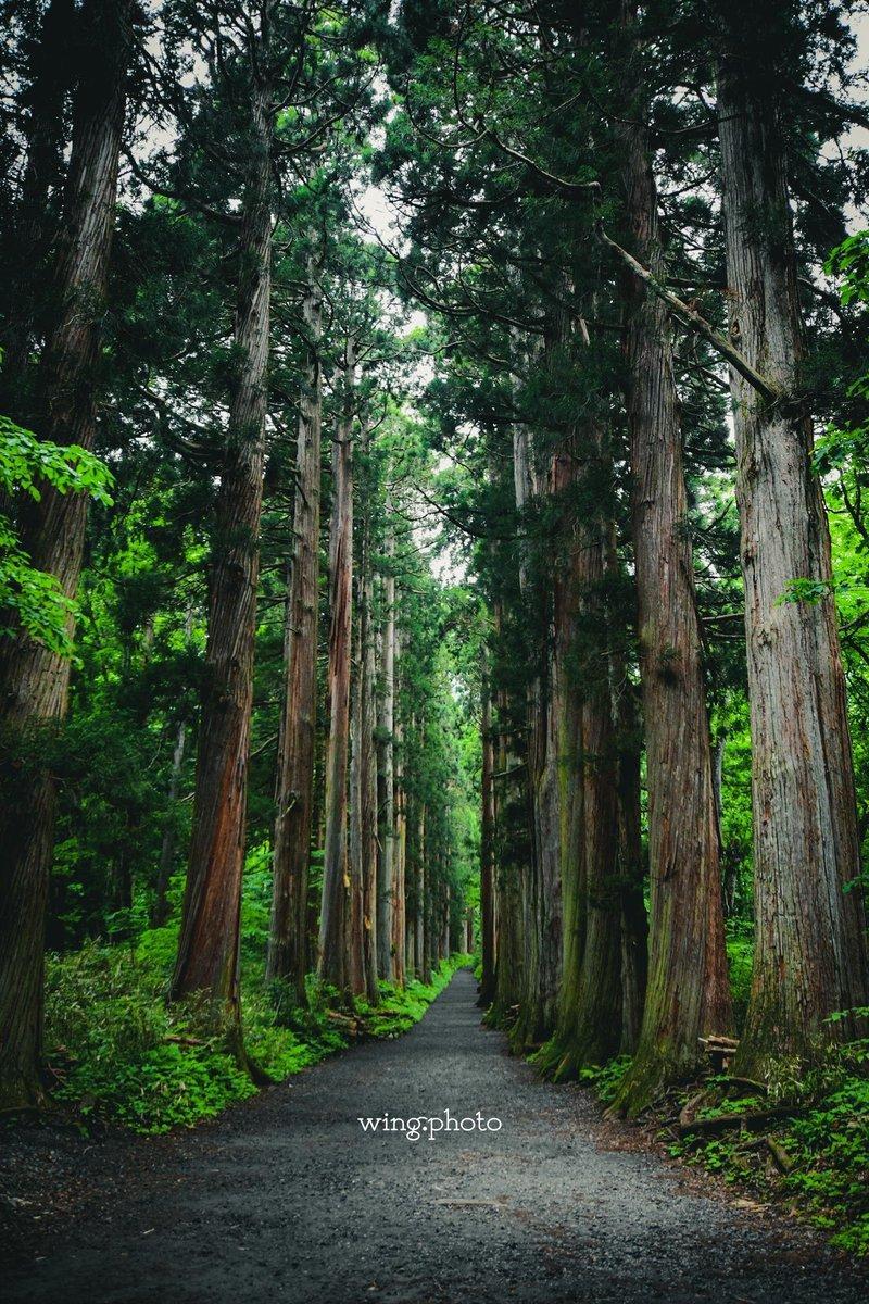 戸隠神社。 #写真好きな人と繋がりたい #写真が好きな人と繋がりたい #写真撮ってる人と繋がりたい  #写真を撮っている人と繋がりたい  #ファインダー越しの世界 #ファインダー越しの私の世界 #nikon #D5500 #japan #photography #nikonphotography #長野 #photo #camera #自然 #nature #戸隠神社