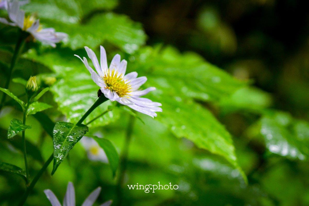 花咲頃には。 #写真好きな人と繋がりたい #写真が好きな人と繋がりたい #写真撮ってる人と繋がりたい  #写真を撮っている人と繋がりたい  #ファインダー越しの世界 #ファインダー越しの私の世界 #nikon #D5500 #japan #photography #nikonphotography #長野 #photo #camera #nature #flower #花 #花咲