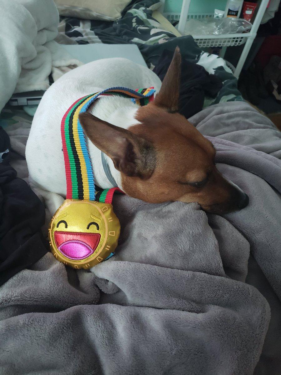 #Dogs4Bidenpic.twitter.com/I88bPqrwX4