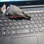 ノートパソコンが好きな文鳥!?専用のパソコンを与えた結果、嬉しそう