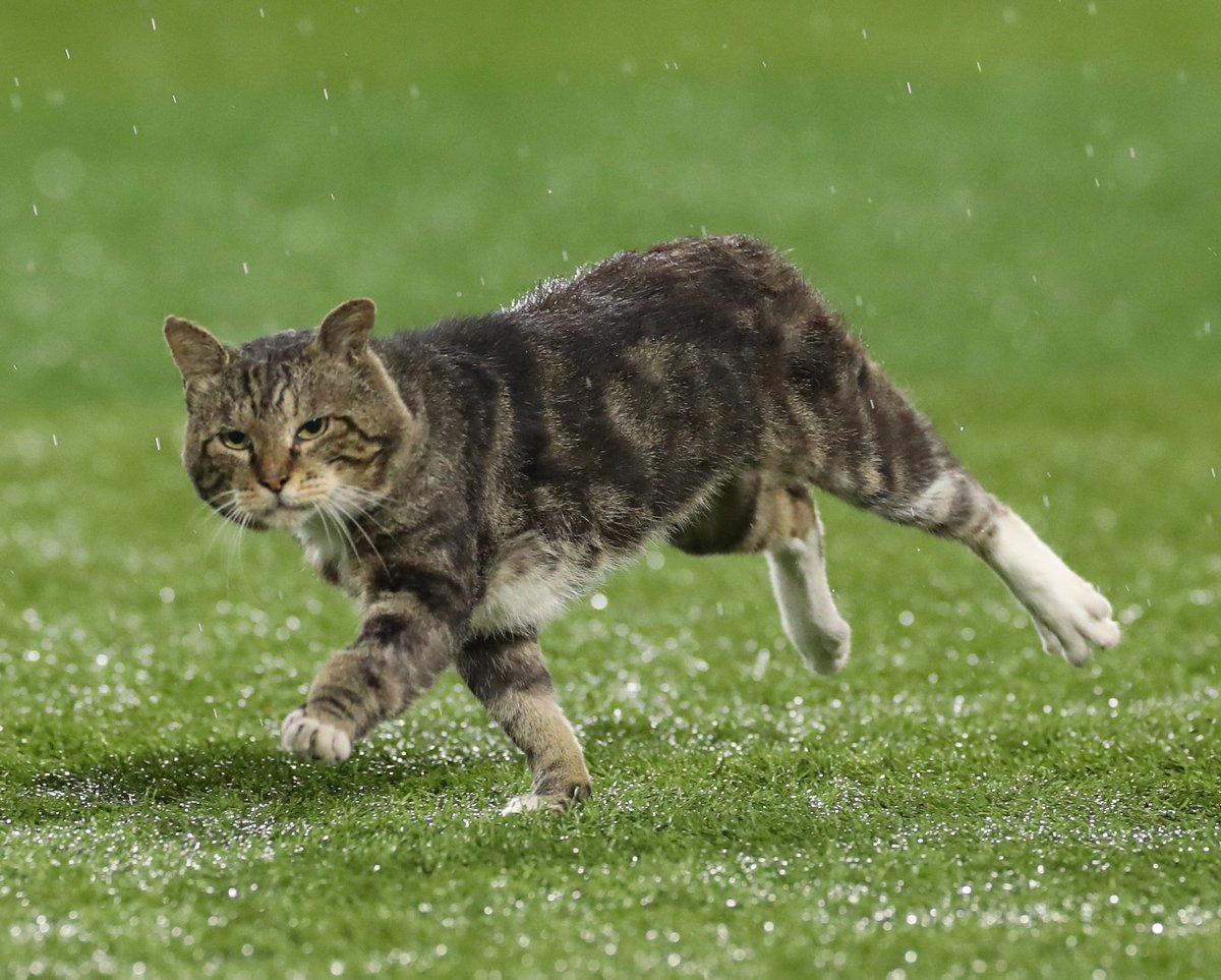 奔跑中的貓 EdIYH28UwAEZ-lD